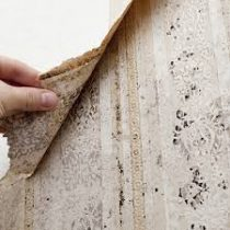 Mold Abatement Remediation Accredited Environmental